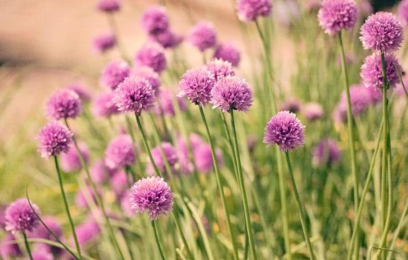 cvety-priroda-flowers-nature-7005.jpg