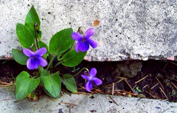 kamni-cvety-lepestki-listya.jpg