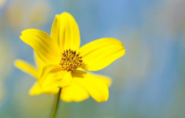 flower-yellow-petals.jpg