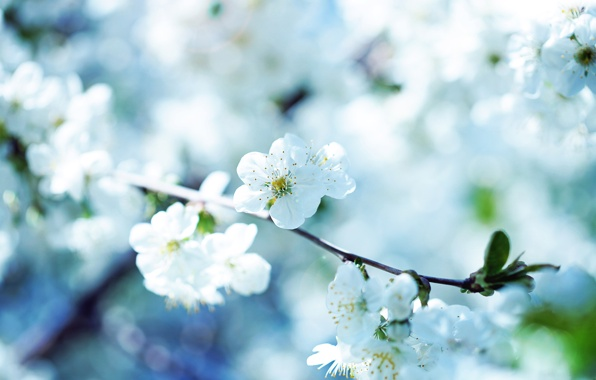 priroda-makro-cvetok-flowers.jpg