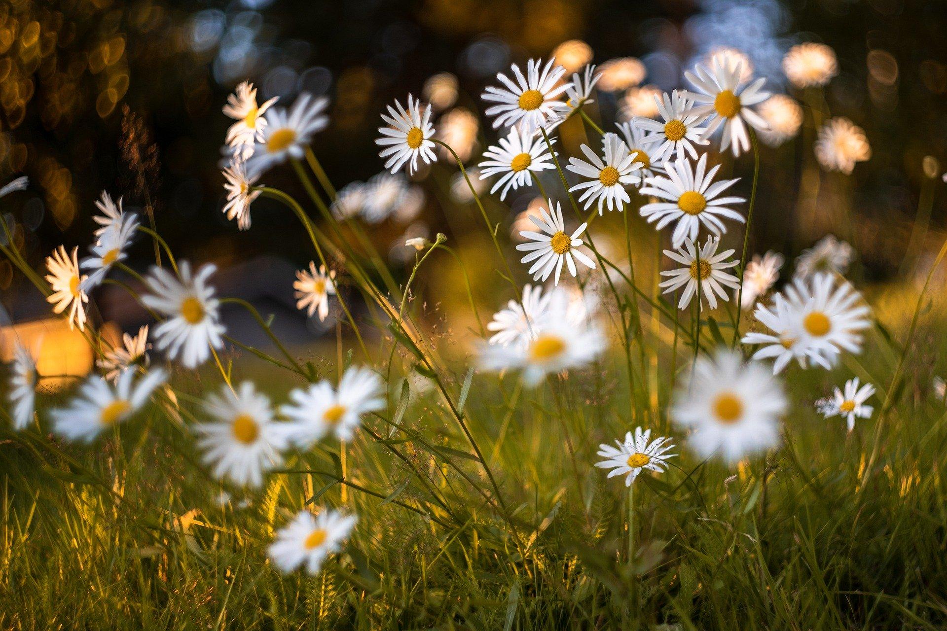 flowers-5479950_1920 (1).jpg