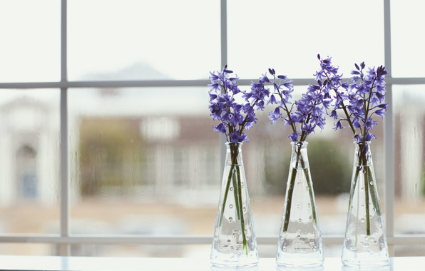 vaza-cvety-lepestki-sirenevye.jpg
