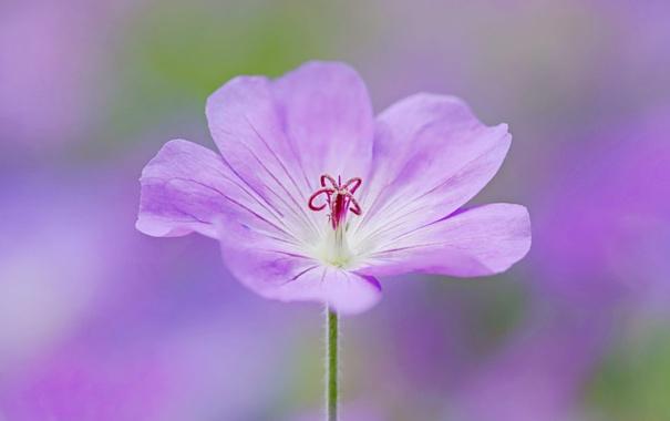 cvetok-lepestki-priroda-550.jpg