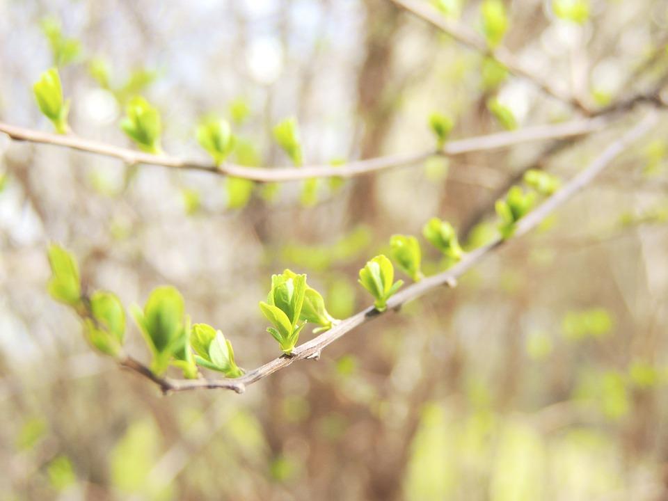 branch-102812_960_720.jpg