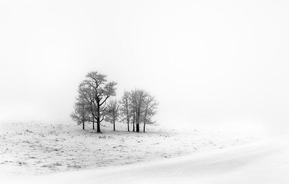 pole-zima-sneg-1426.jpg