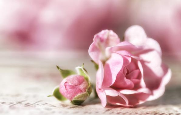 roza-buton-makro-4749.jpg