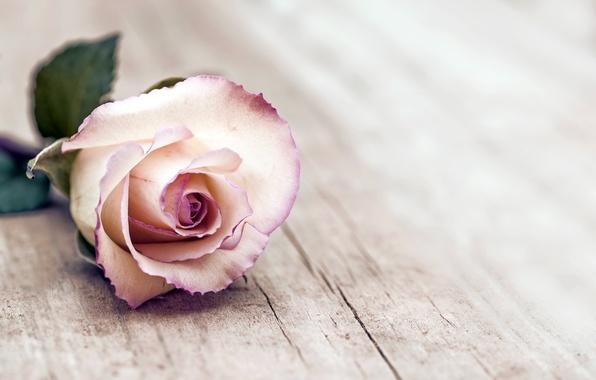 rose-flowers-wood-roza.jpg