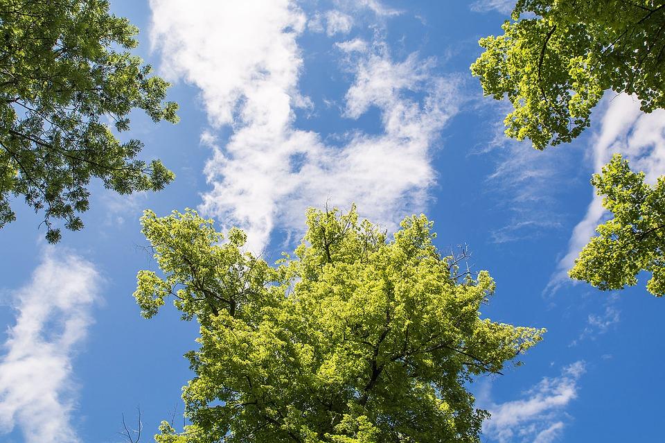 tree-1217371_960_720.jpg
