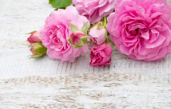 rozovye-roses-pink-rozy-buket-bud-flowers-tsvety.jpg