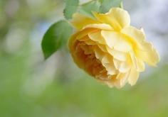 생명에 의한 안과 밖의 회복(1)